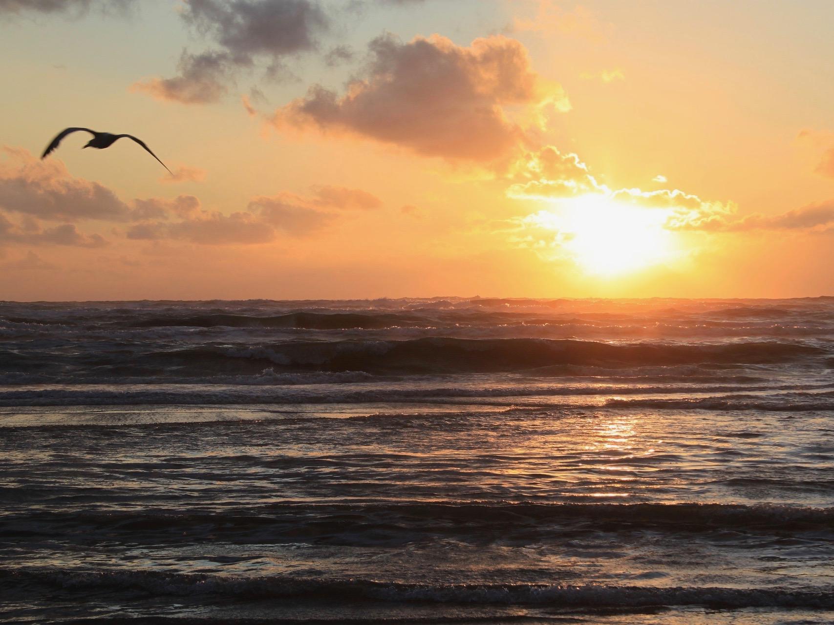 Kitesurflessen in Zandvoort leren kiten kitesurfcursus goedkoop